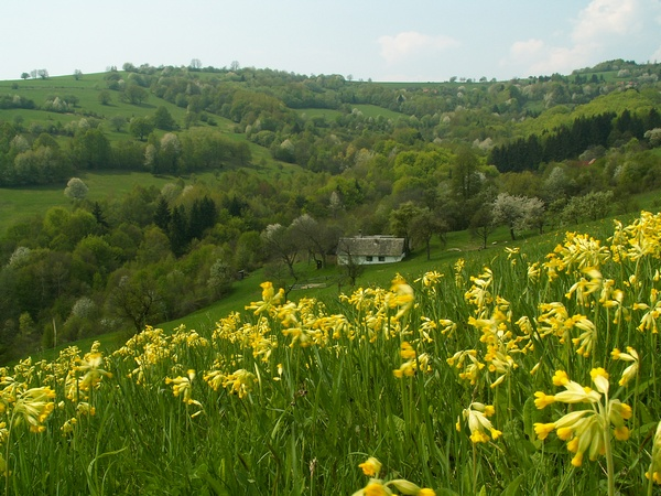 White Carpathian Landscape